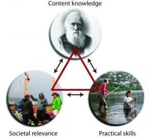 bioceed-triangelet
